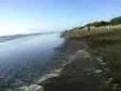 costa atlantica  Mar de ajo